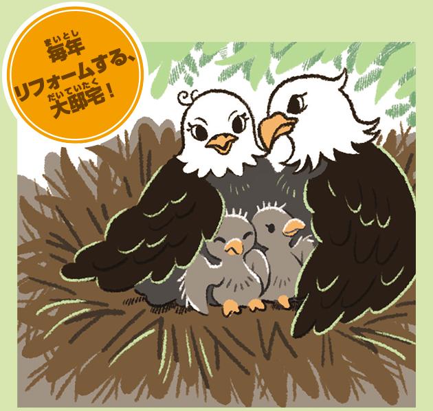 ハクトウワシの巣