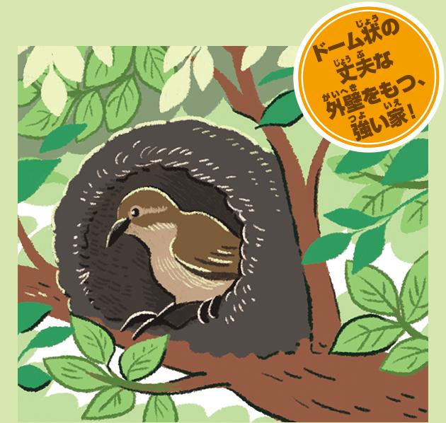 セアカカマドドリの巣