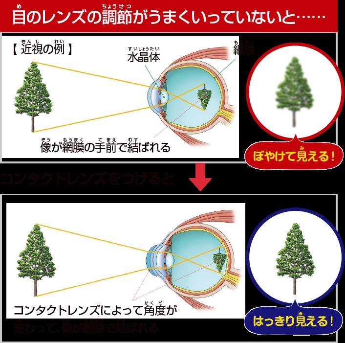 目のレンズの調節