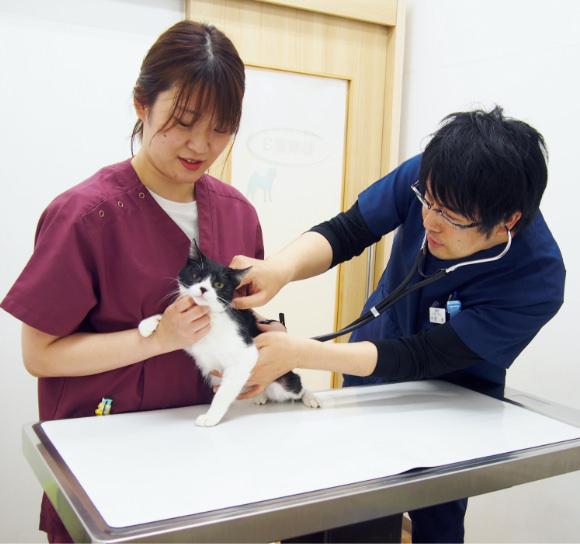 獣医師・動物看護師