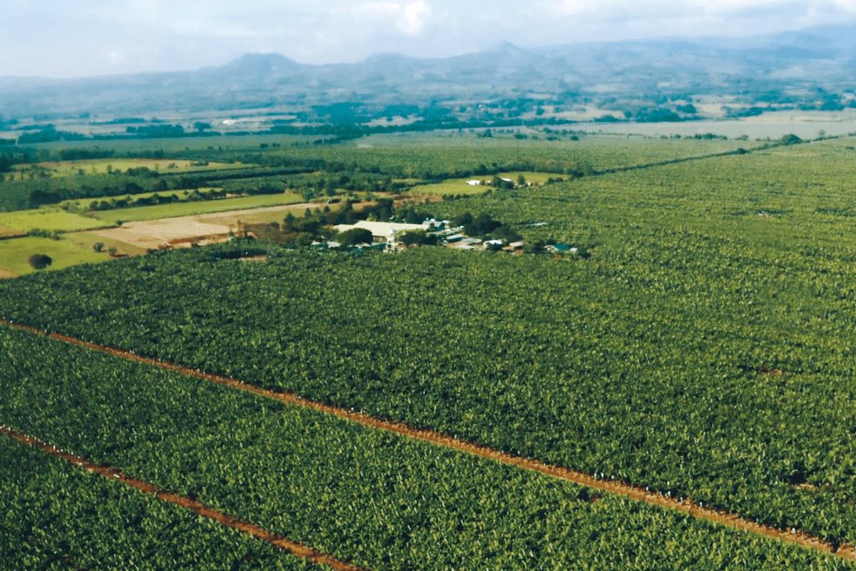 広大な農園