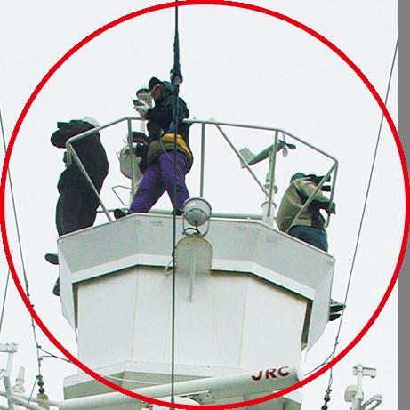 トップマストでクジラを探す調査員