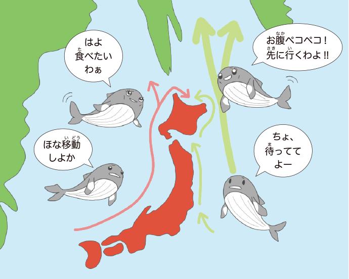 クジラのルート