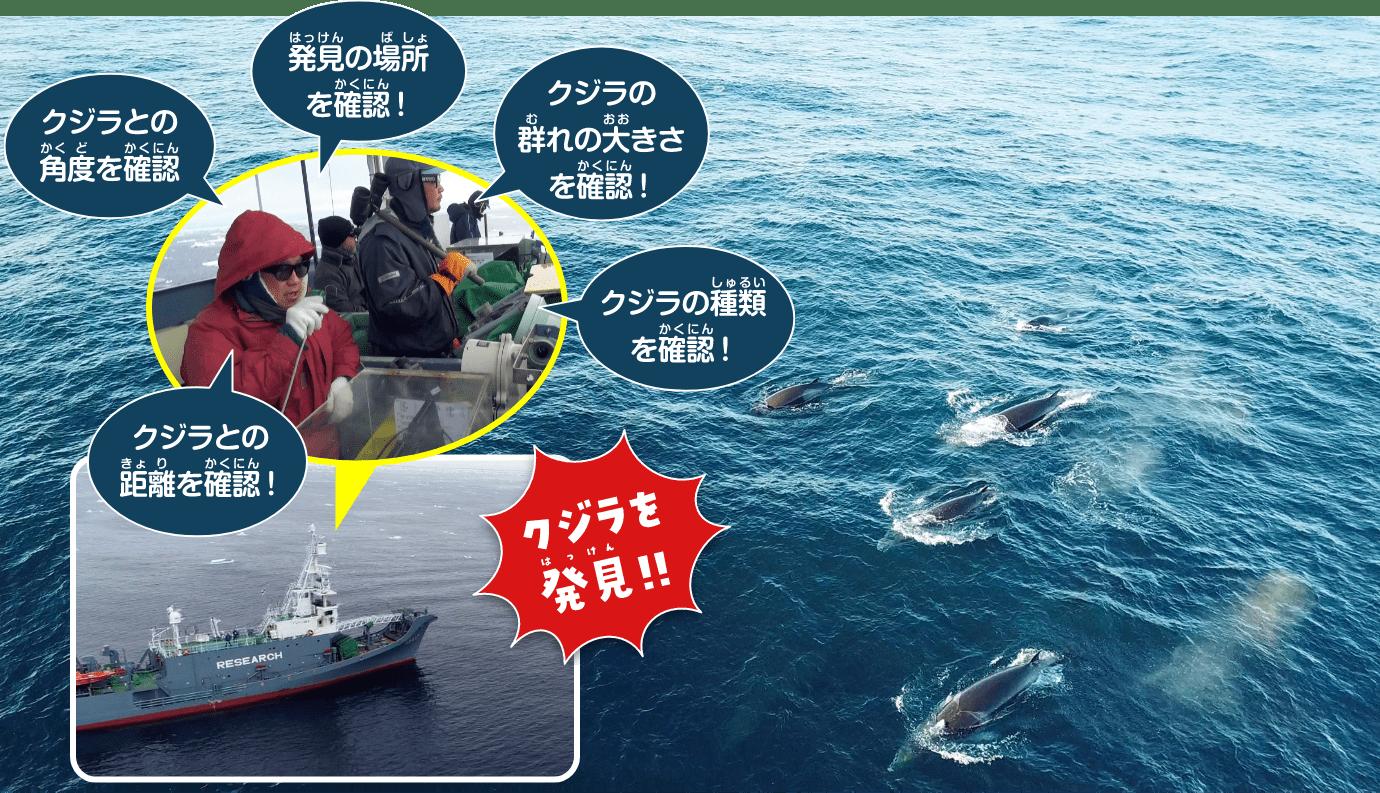 クジラの資源量推定