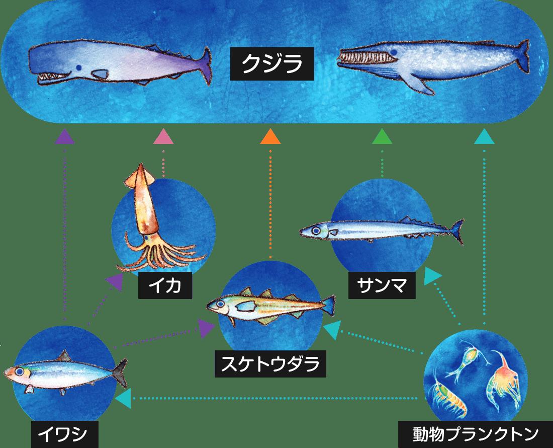 海の食物連鎖