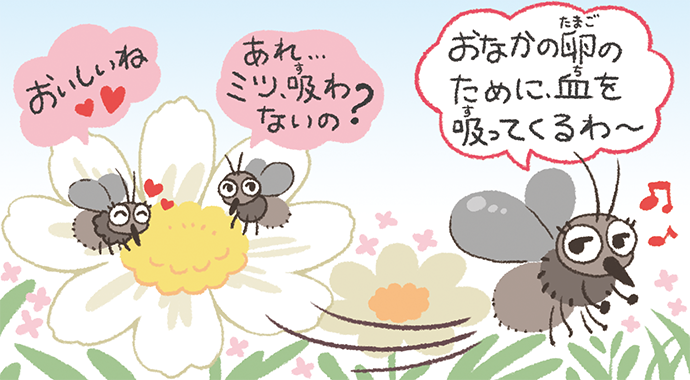 血を吸うのは卵をもったメスの蚊だけ!