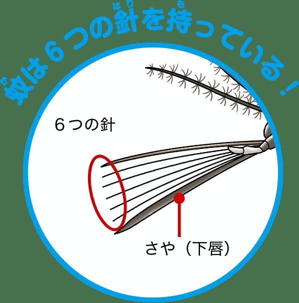 蚊の口の構造