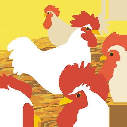 南米で飼育される鶏たち。そのまま日本ではなく…