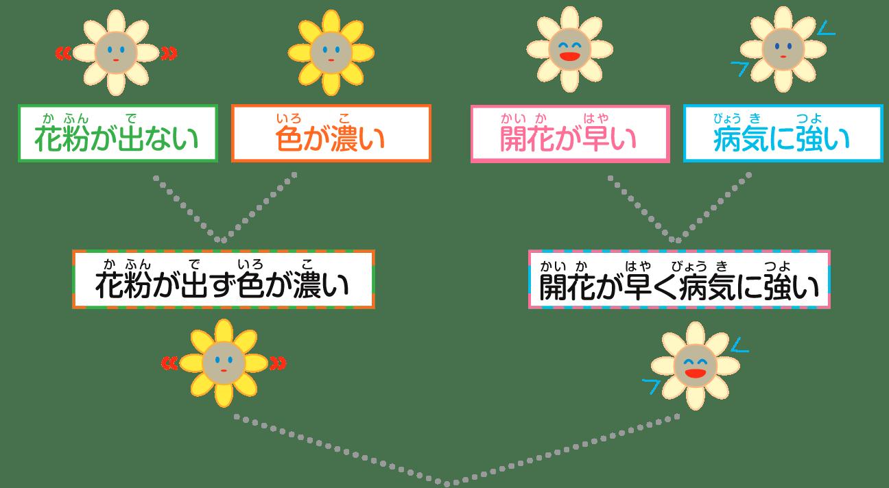 品種改良の工程
