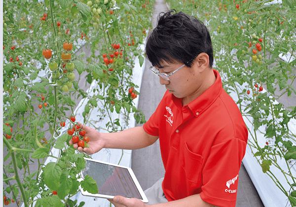 ICTでトマト栽培