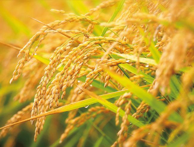 米ぬかロウ